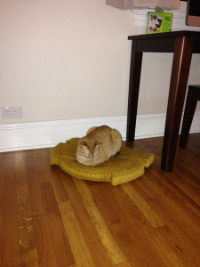hobie cushion_web